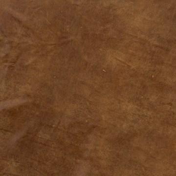 Desert Sand Palomino